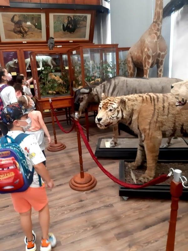 Școala de vară 2021 – Muzeul Zoologic din Cluj Napoca